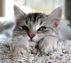 So are you a puppy or a kitten ? Quiz