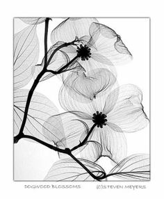 Floral Radiography...