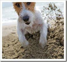 Como fazer um cachorro parar de cavar o jardim