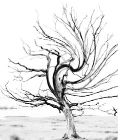 Baum - Impressionen 4