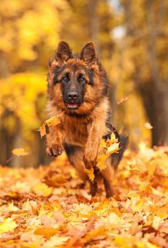 Running through the leaves - so much fun for your dog!