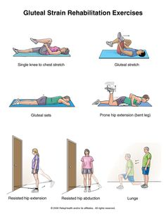 images gluteal muscles | Gluteal Strain Exercises