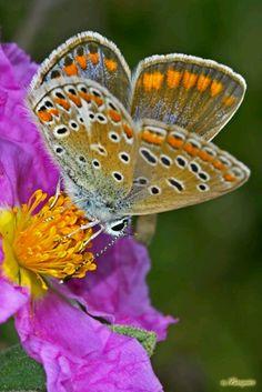 """""""O segredo é não correr atrás das borboletas... É cuidar do jardim para que elas venham até você."""" (Mario Quintana)"""