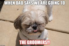 Shih Tzu, Oakley, Funny dog Source by oberleyj The post Shih Tzu, Oakley, Funny dog appeared first on Stubbs Training. Shih Tzu Mix, Shih Tzu Puppy, Shih Tzus, Imperial Shih Tzu, Puppy Quotes, Shitzu Puppies, Puppy Drawing, Cute Dogs Breeds, Dog Breeds