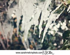 frosted leaves by Stephanie on Etsy