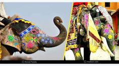 Festivals Of India, Fairs And Festivals, March Month, Jaipur, Holi, Camel, Elephant, Events, Holi Celebration