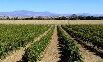 Vineyards from the Santa Ynez Valley, Santa Barbara
