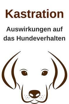 Hund kastrieren lassen - Einfluss der Kastration auf das Hundeverhalten.