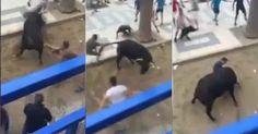 osCurve   Contactos : Impactante video: un toro cornea mortalmente a un ...