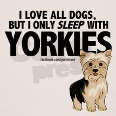 Yorkshire Terrier owners love their dogs, and Yorkie moms and dads have been known to let their pups sleep in the bed at night! This is a great way to show your Yorkie love, or would make a cute gift. #yorkshireterrier