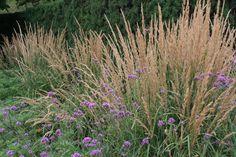Karl Foerster Grass & Verbena