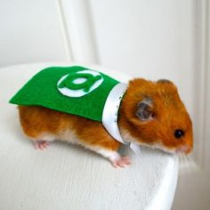 These Costumes Turn Your Tiny Pets Into Superheroes