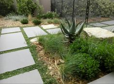 Paving ground cover aloe grass drought hardy water wise South Africa western cape mulch large pavers path rocks garden landscaping indigenous design modern