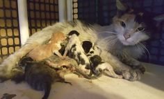 A calico cat decided to have her litter of 6 kittens in the middle of a local steel company. They were covered with dirt, hydraulic oil and metal shavings.Courtesy: The Cat House of the KingsOn August 30, workers at a local steel company heard kitten cries in the middle of the plant. When they found...