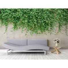 Veľkoformátová tapeta Ivy on Wall Ivy, Wall, Profile, Hedera Helix