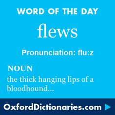 flews (noun): The thick hanging lips of a bloodhound or similar dog. Word of the Day for 20 January 2016. #WOTD #WordoftheDay #flews