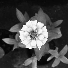 #jeamtua #flower