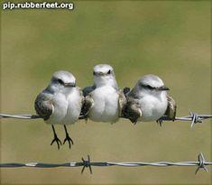 birds photo by pqsy4ka