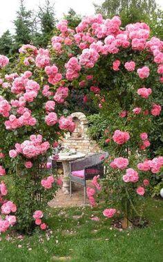 Dichtgefüllte rosafarbene Kletterrose 'Rosarium Uetersen'