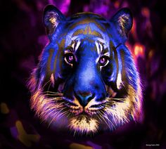 Blue Tiger of the Purple Forest - by George Pedro