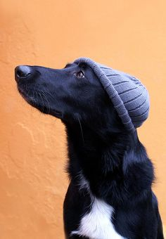 I have this hat...same hat as the dog.  Sounds about right...
