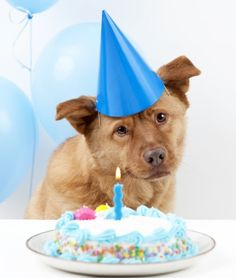 How To Bake a Dog Birthday Cake - Paw Nation, 21 links to different dog friendly cakes, cupcakes, and frosting