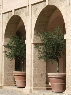 olive tree in containers Potted Trees Patio, Tree Planters, Potted Plants, Italy Landscape, Landscape Design, Garden Design, Arbequina Olive Tree, Potted Olive Tree, Arbour Day