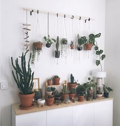 In love with this hanging cactus and succulent arrangement. #hanginghouseplants