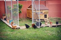 Clever way to keep dogs from digging under your chicken pen!