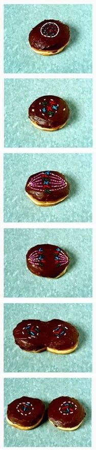 Cell division donuts - too cool!