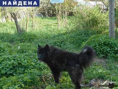Найдена собака кобель помесь хаски г.Орехово-Зуево http://poiskzoo.ru/board/read23811.html  POISKZOO.RU/23811 Найден кобель .. месяцев помесь хаски. Окрас черный с белым. Верну хозяевам или отдам в добрые руки.   РЕПОСТ! @POISKZOO2 #POISKZOO.RU #Найдена #собака #Найдена_собака #НайденаСобака #Орехово #Зуево #ОреховоЗуево #Орехово_Зуево