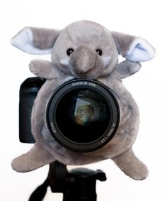 Look what I found on #zulily! Elephant Large Shutter Hugger by Shutter Huggers #zulilyfinds