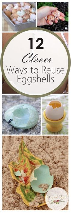 How to Reuse Eggshells, Uses for Eggshells, que no se y6 Eggshells, Eggshells in the Garden, Gardening Hacks, Gardening Tips and Tricks, Gardening 101, Gardening Tips, Reusing Eggshells, Popular Pin