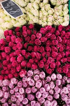 Mauve, pink and cream roses at a Paris Sunday market.
