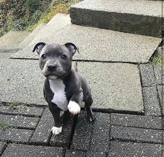 Most dogs don't need a raincoat or one-Die meisten Hunde brauchen weder einen Regenmantel noch einen Regenmantel. Most dogs do not need a raincoat or raincoat. Baby Animals Pictures, Cute Animal Pictures, Animals And Pets, Cute Dogs And Puppies, Baby Dogs, Doggies, Puppies Puppies, Cute Pitbull Puppies, Pitbull Boxer