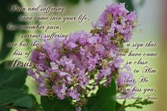 Original photograph by Robyn Stacey of Lavender Crape Myrtle with Pain and Suffering... kiss of Jesus quote by Blessed Mother Teresa   Copyright 2014 Robyn Stacey Photography. All rights reserved