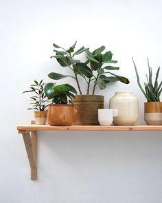 Pure nature | plantes d'intérieur, pot en terre cuite
