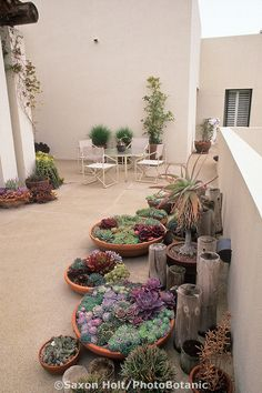 Low Water Use : Drought Tolerant Containers of succulents on Santa Barbara patio : Photo © Saxon Holt