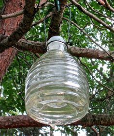 Best Yellow Jackets and Wasp Traps To The Rescue