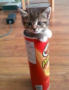 I guess his name is Pringles.  :-)
