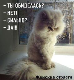 -Are you offended? Funny Cats, Funny Animals, Cute Animals, Cute Cats And Kittens, Cool Cats, Russian Humor, Funny Animal Pictures, Man Humor, Beautiful Cats