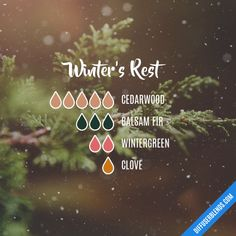 Winter's Rest - Essential Oil Diffuser Blend