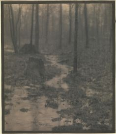 Woods Interior by Edward Steichen Edward Steichen, Vintage Nature Photography, Landscape Photography, Art Photography, Fine Art Photo, Photo Art, Connecticut, People Of Interest, Alfred Stieglitz