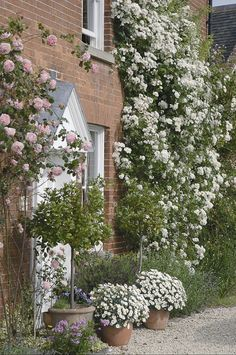 Rambling Rector.  To learn more about growing beautiful roses you can take a course with David Austin roses here http://www.my-garden-school.com/course/david-austins-growing-roses/