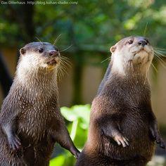 Das otter haus photos | Das Otterhaus 【カワウソ舎】 | カワウソといういき ...