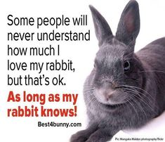 The bunz is the most important! #rabbit #rabbits #rabbitlove #rabbithole #rabbitlife #rabbitofinstagram #rabbitsworldwide #bunny #bunnylove #bunnystagram #bunnylovers #bunnyrabbit #bunnygram #bunnylife #pet #pets #cute