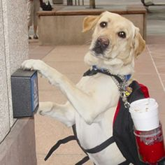 Service-Dogs... There is a super duper special VIP place in heaven for them