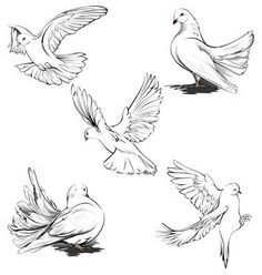 20 Meilleures Idees Sur Dessin Colombe Dessin Colombe Colombe Tatouage Dessin