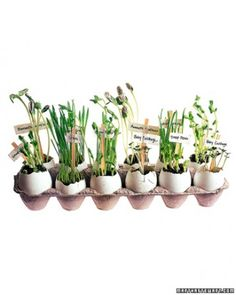 """See the """"Eggshell Flowerpots"""" in our  gallery"""