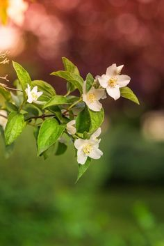 A beautiful free photo of flower bloom and petal nature. This image is free for both personal and commercial use. Eco Friendly Cars, Eco Friendly House, Local Dentist, Bokeh Background, Teeth Care, Success, Flower Pictures, Barista, Affiliate Marketing